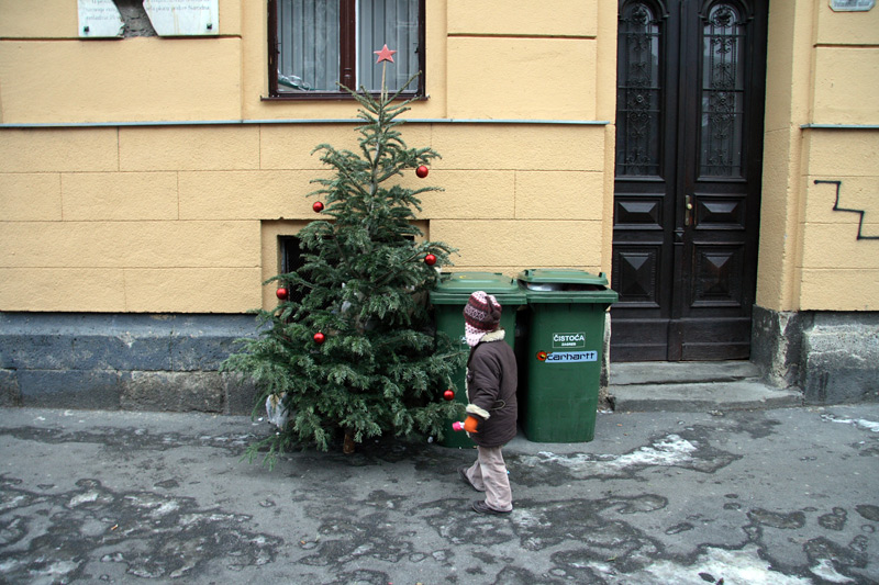 Igor Grubic Christmas Trees